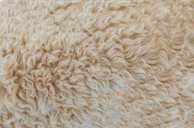 background beige brown close up